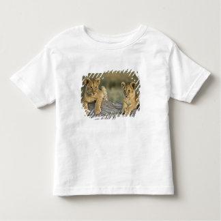 Lion cubs on log, Panthera leo, Masai Mara, Toddler T-Shirt