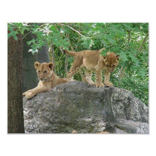 Lion cubs on the rocks photo art