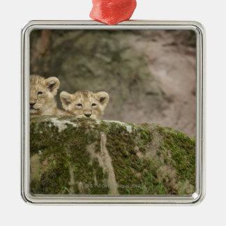 Lion Cubs Peeking Over Rock Christmas Ornament