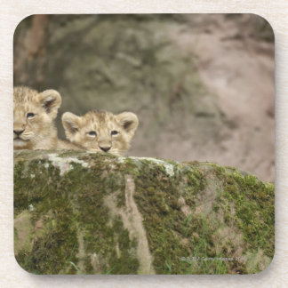 Lion Cubs Peeking Over Rock Coaster