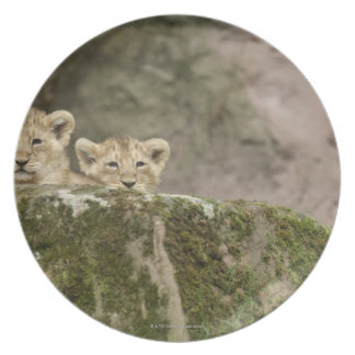 Lion Cubs Peeking Over Rock Plate