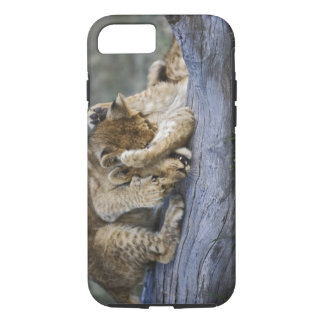 Lion cubs playing on log, Panthera leo, Masai iPhone 8/7 Case