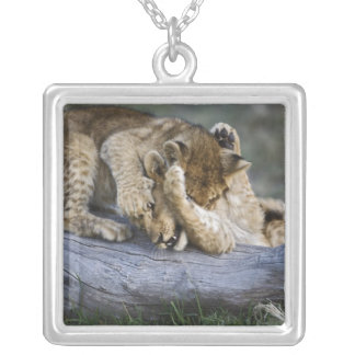 Lion cubs playing on log, Panthera leo, Masai Silver Plated Necklace