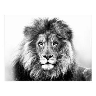 Lion Design Postcard