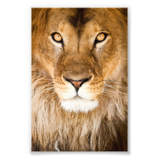 Lion Face Closeup Photo Print