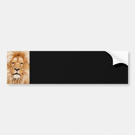 Lion Face Photograph Bumper Sticker