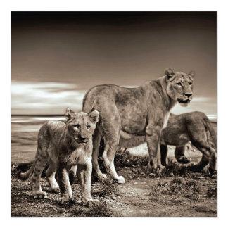 Lion Family 13 Cm X 13 Cm Square Invitation Card