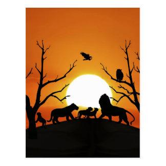 Lion family at sunset postcard