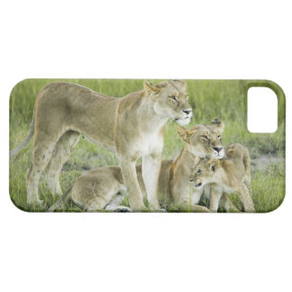 Lion family in Kenya, Africa Case For The iPhone 5