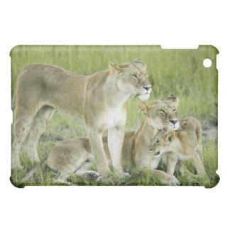 Lion family in Kenya, Africa iPad Mini Case