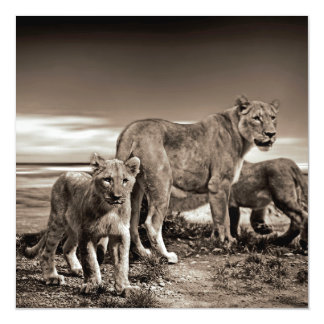 Lion Family Magnetic Invitations
