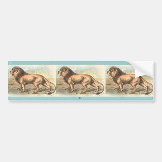 Lion, Felis leo Bumper Sticker