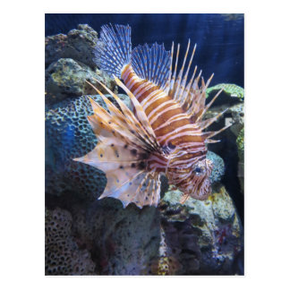 Lion Fish, Adventure Aquarium Postcard