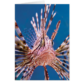 Lion Fish Looking at You Card