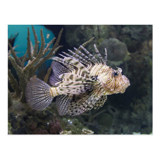 Lion Fish Pterois Postcard