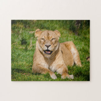 Lion Hanging Out Puzzles
