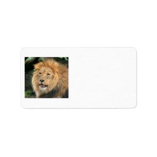 lion head beautiful male photo address labels
