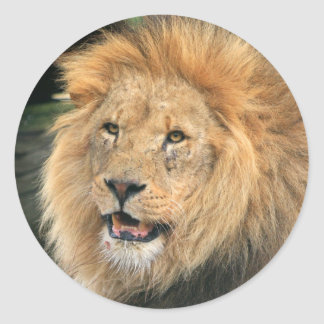 Lion head male beautiful photo sticker, stickers