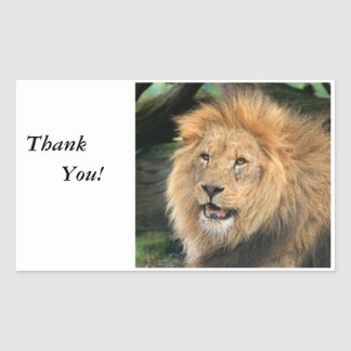 Lion head male beautiful photo thank you stickers