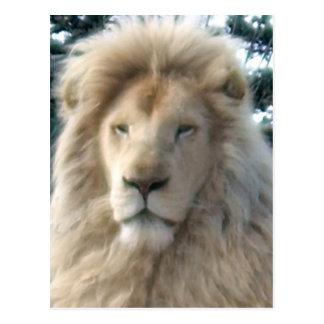Lion Head postcard