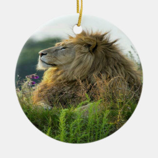 Lion in Grass Round Ceramic Decoration