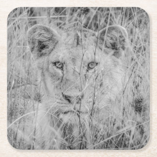 Lion in Grass Paper Coaster