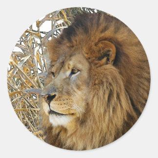 LION IN GRASS ROUND STICKERS