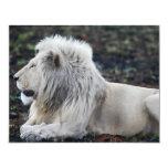 Lion in repose 4.25x5.5 paper invitation card