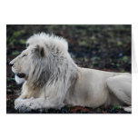 Lion in repose greeting card