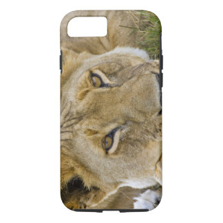 Lion in the brush, resting in the heat of the iPhone 8/7 case