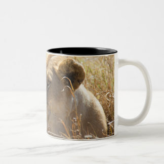 Lion in the laying in the high Serengeti grass Two-Tone Coffee Mug