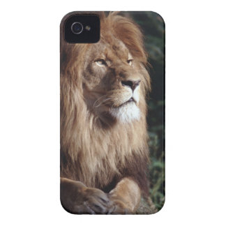 lion iPhone 4 cases