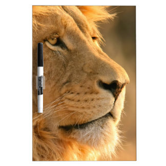 Lion is known to be the King of Beasts Dry Erase Board