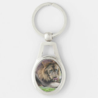 Lion Licking His Chops! Silver-Colored Oval Metal Keychain