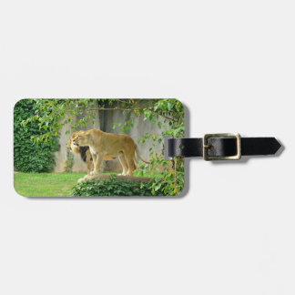Lion Lioness Luggage Tag