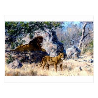 Lion Lioness Nature Painting Postcard
