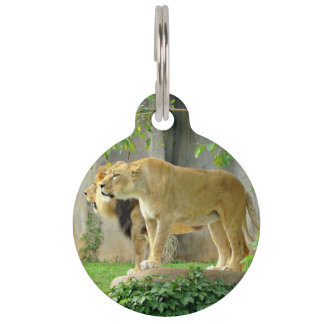 Lion Lioness Pet Tag