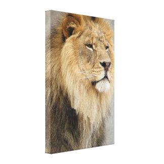 Lion Lovers King Of the Jungle Gallery Wrapped Canvas