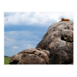 lion lying on a big rock in Tanzania Africa Post Cards
