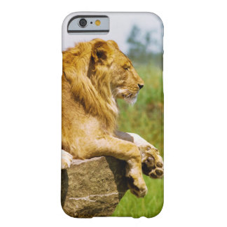 Lion lying on a rock barely there iPhone 6 case