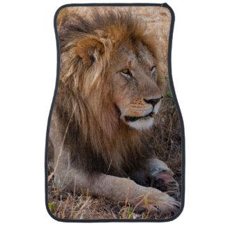 Lion Maasai Mara National Reserve, Kenya Car Mat