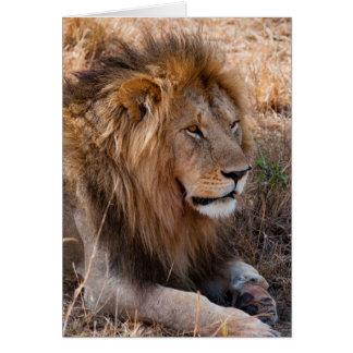 Lion Maasai Mara National Reserve, Kenya Card