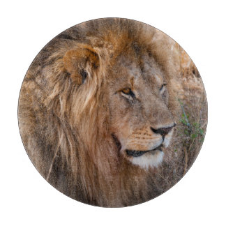 Lion Maasai Mara National Reserve, Kenya Cutting Board