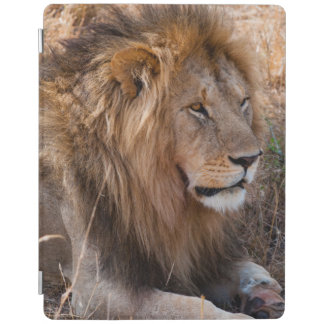 Lion Maasai Mara National Reserve, Kenya iPad Cover