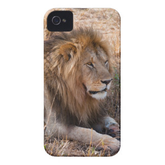 Lion Maasai Mara National Reserve, Kenya iPhone 4 Case