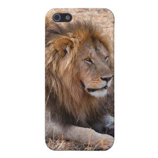Lion Maasai Mara National Reserve, Kenya iPhone 5 Covers
