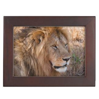 Lion Maasai Mara National Reserve, Kenya Keepsake Box