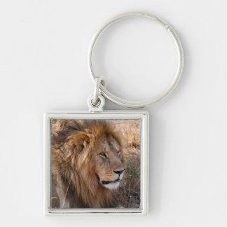 Lion Maasai Mara National Reserve, Kenya Key Ring