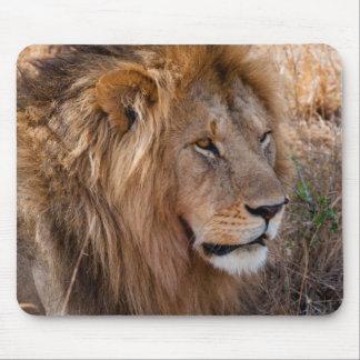 Lion Maasai Mara National Reserve, Kenya Mouse Pad