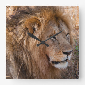 Lion Maasai Mara National Reserve, Kenya Square Wall Clock